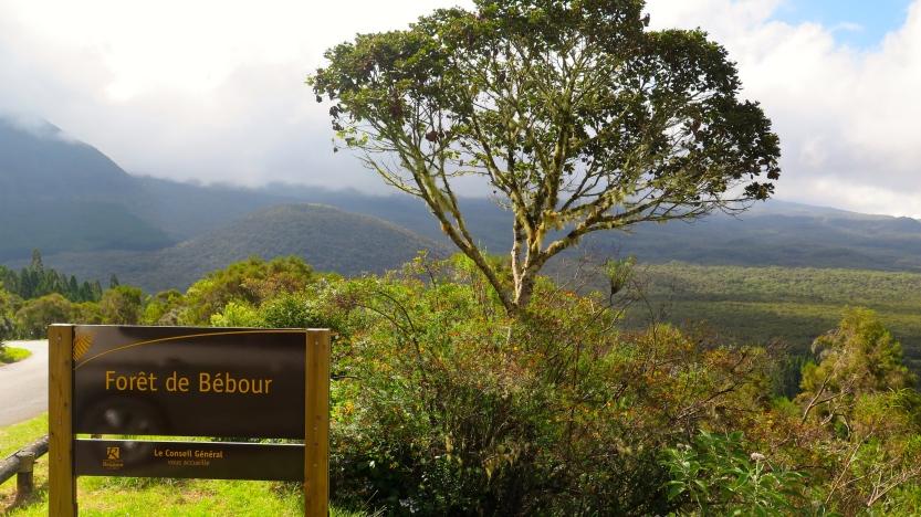 Forêt de Bébour-Bélouve