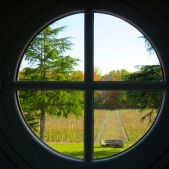 Perspective sur les vignes