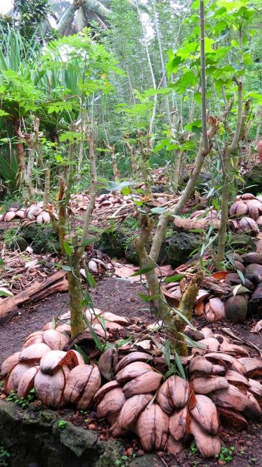 Plantation traditionnelle de vanille