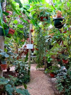 conservatoire-begonia-rochefort05