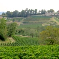 Paysage vignes SaintEmilion