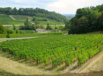 Paysage viticole Saint Emilion